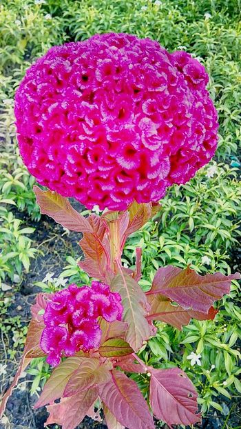 Flower Flower Collection Flower And Leaves Flower In The Garden Flowering Plants Beauty Of Nature Color Of Nature Beauty Of Flower Flower Color Pink Flower Beautiful Nature Flower Photography Pink And Green Pink Tones