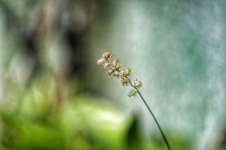Spires Helios Helios 44-2 Xm1 Flowers Fujifilm Fujifilm_xseries