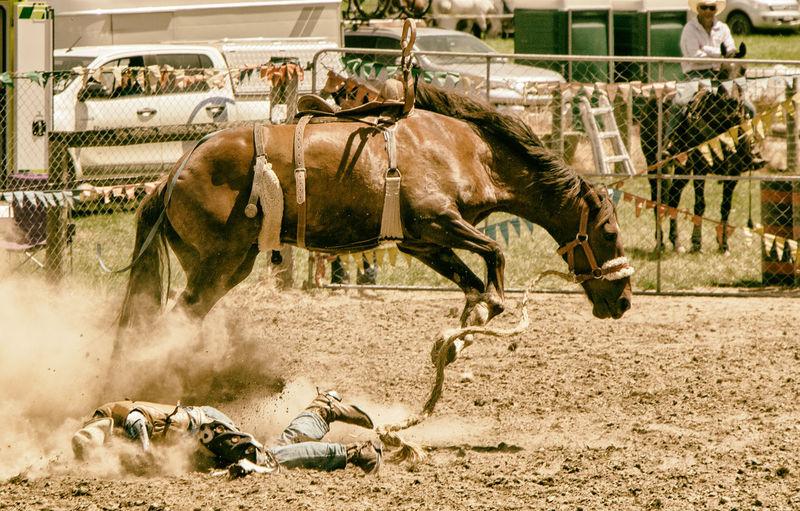 View of horses running