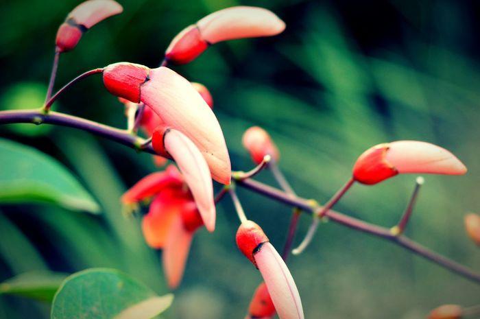 Theme: Flower. Nature Beauty In Nature Close-up Plant Beatifulcolor Flowers,Plants & Garden Flowerphotography Eyeemphotography Open Edit Nikon D3200