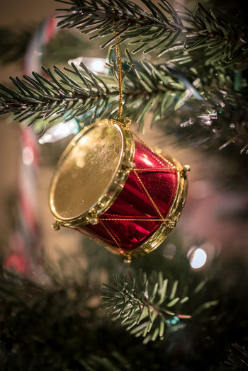 Drum Christmas ornament hanging on a pine tree. Celebration Drum Event Gold Green Holiday Lights Ornament Pine Red Tradition Tree Winter Xmas Bauble Candy Cane Christmas Ornament Decoration Festive Fir Foreground Focus No People Pin Lights Season  Seasonal Holiday Moments