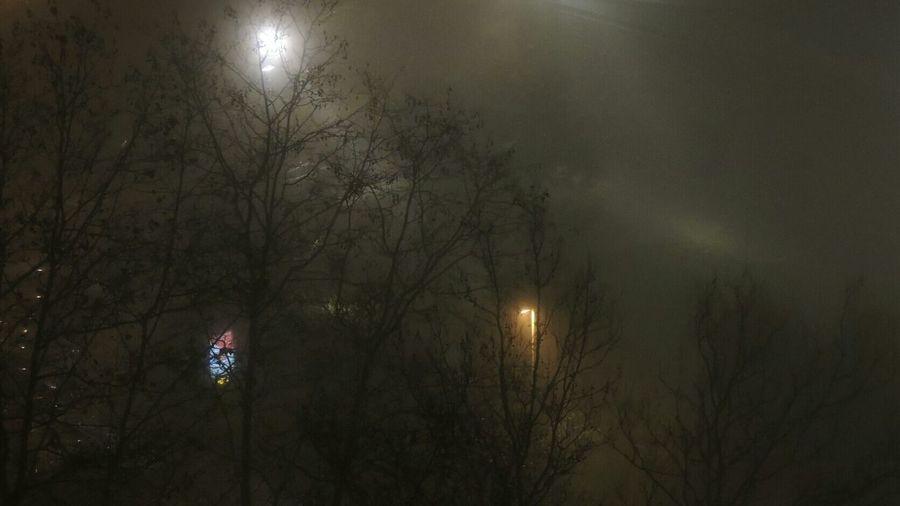 Niebla Desde Mi