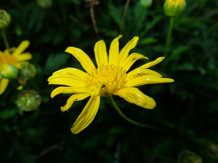 Close-up of yellow flower against blurred background