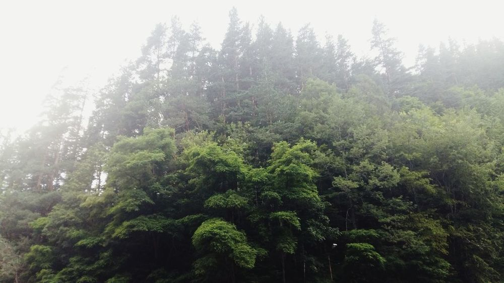 Tranquility Travel Travel Photography Nature Woods Trees Trees And Sky Greenery Green Gloomy Vivid Vivid Colours