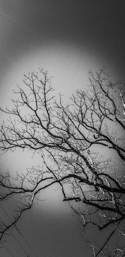Silhouette bare tree by lake against sky