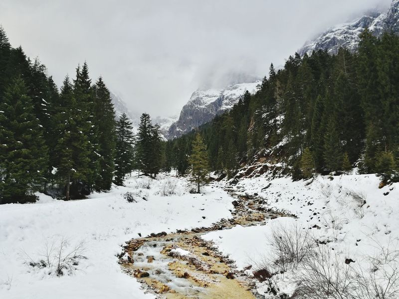 Stream Dolomites Snow Mountain Winter Tree Forest Outdoors