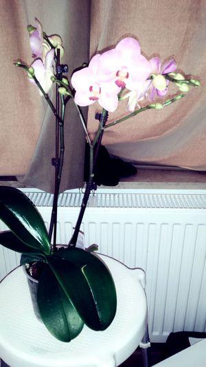 Happywomansday Flowers Suprise Present Sunshine ☀