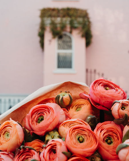 Nothing Hill Outdoors Plant Flower Flowering Plant Rosé Freshness Beauty In Nature Rose - Flower Vulnerability  Fragility Close-up Focus On Foreground Nature Flower Arrangement No People Inflorescence Built Structure Flower Head Bouquet Day Architecture