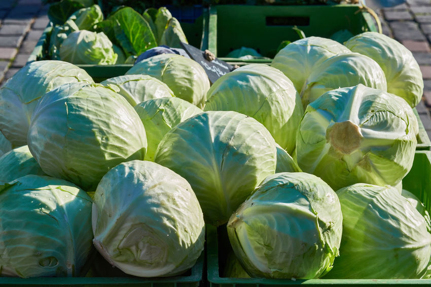 Green heads of cabbage on the market Colorful Eatng First Eyeem Photo Freshness Green Color Healthy Local Landmark Low Carb Nature Nature_collection Orange Color Pumpkin RGanimals Vegetable
