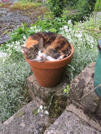 Pet Portraits Calico Cat Tortoiseshell Cat Cat In A Flower Pot squashed plants