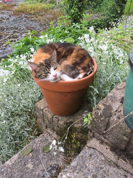 Pet Portraits Calico Cat Tortoiseshell Cat Cat In A Flower Pot squashed plants