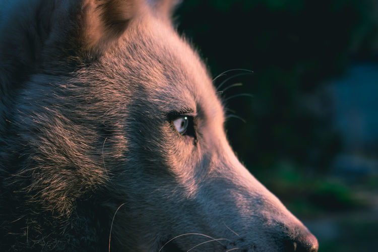 Animal Head  Animal Themes Close-up Day Dog Domestic Animals Focus On Foreground Mammal Nature No People One Animal Outdoors Pets The Great Outdoors - 2017 EyeEm Awards Pet Portraits