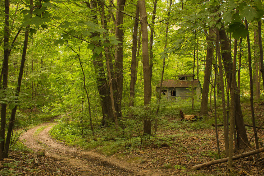 Maple syrup shack Forest Path Beauty In Nature Day Forest Growth Michigan Outdoors Nature No People Outdoors Rural Scene Scenics Shack Summer Green Tranquil Scene Tranquility Tree Tree Trunk WoodLand