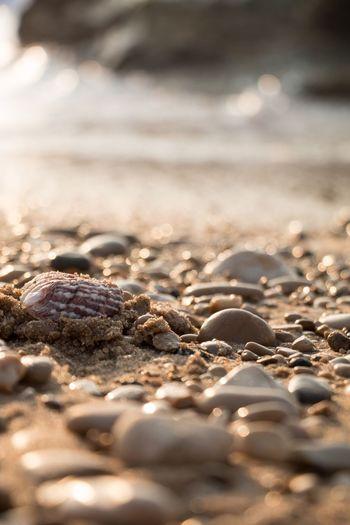 Sea Sand Water Seashells Taking Photos Close-up Showcase March