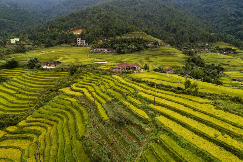 Terraced Field Terrace Rice Field Road Yellow Color Small Town Mountain Agriculture Agricultural Field Beauty In Nature Green Color Growth Mountain Range Outdoors Plantation Nature
