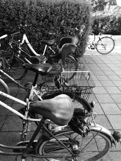 Bicycle Bicycle Basket Bicycle Rack Cycling Day Full Length Land Vehicle Lifestyles Men Mode Of Transport Nature One Person Outdoors Real People Riding Spoke Stationary Transportation Tree