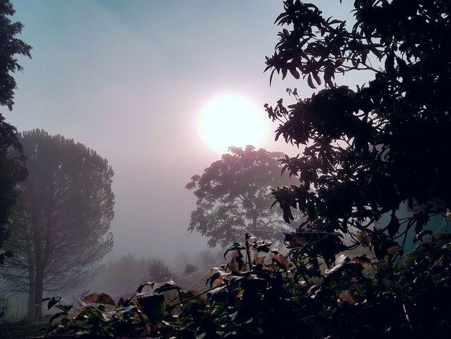 Tree Sun Beauty In Nature Low Angle View Outdoors Growth Tree Area Freshness No People Nature Sky The Week On EyeEm EyeEm Best Shots EyeEmNewHere Autumn Cloud - Sky Fog Foggy Morning Fog_collection Nebbia Luci E Ombre Scenics Mattina Presto Mattina Di Nebbia Luci Sfocate