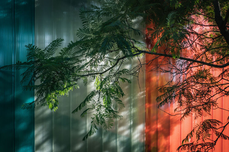 Digital composite image of trees and plants in forest