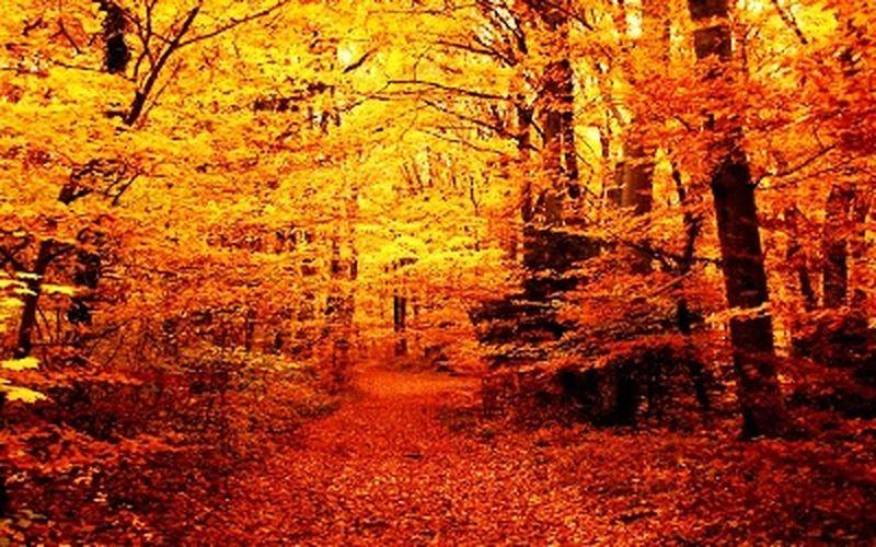 😍😍😍😍❤️❤️❤️❤️❤️ First Eyeem Photo Takip Et Takipteyim◻▪ ◾◽◾ ⬛⬜ Manzara Dediğin  Manzara😍😍 Manzara Dediğin  Ağaçlar ♥♡♥ Doğa Sonbahar Da Yapraklarını Döker🍃