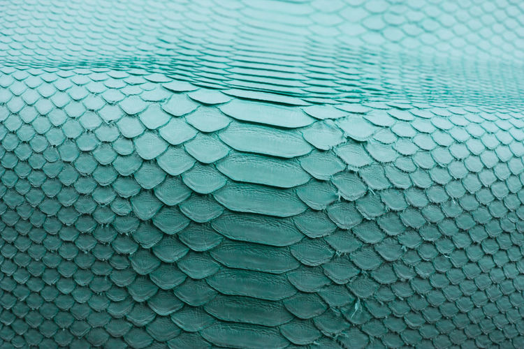 Full frame shot of swimming pool, python skin background