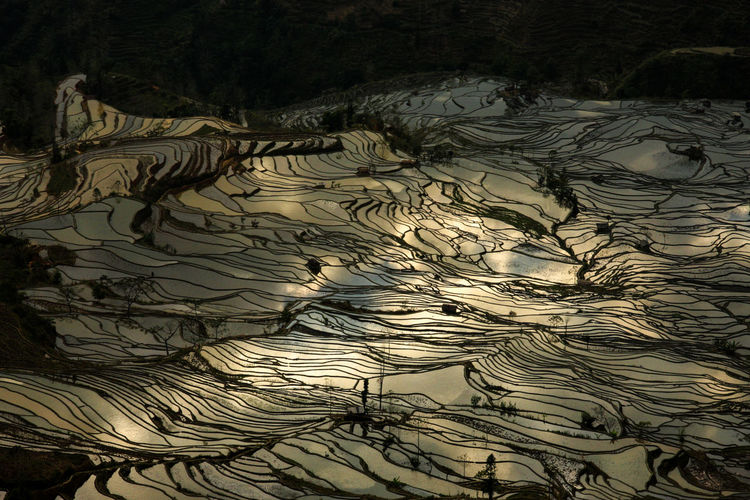Agriculture China Golden Nature No People Outdoors Reflection Reflections Rice Rice Field Rice Fields  Rice Paddy Rice Terraces Sunset Tree World Heritage Yuanyang Yuanyang Terraced Fields Yunnan Miles Away Lost In The Landscape Perspectives On Nature