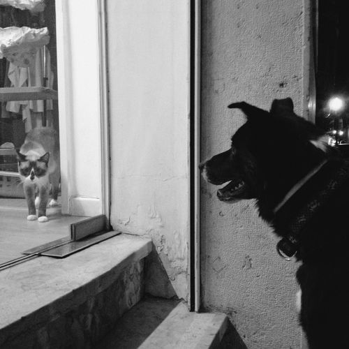 Stealth cat gets found out Streetphoto_bw Cats And Dogs Lisbon