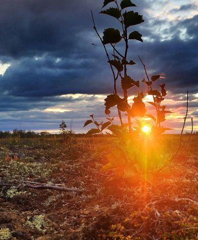 Nature On Your Doorstep северный край север природа Севера Salekhard Yamal Big World Russia #nature #природа #yamal #yanao #tundra #северныйКрай #тундра #sunset #закат #север
