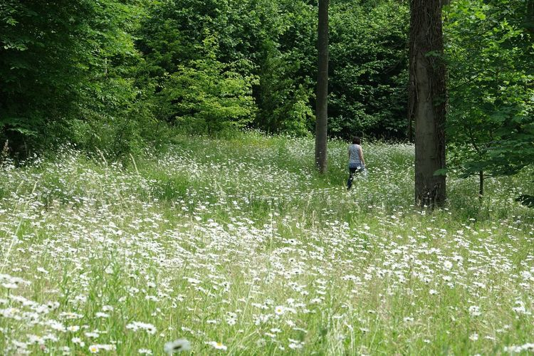 Rear view of person on field in forest
