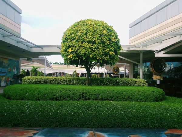 Green Color Tree Ornamental Garden Hedge Topiary Growth No People Grass Sky Nature Outdoors Day