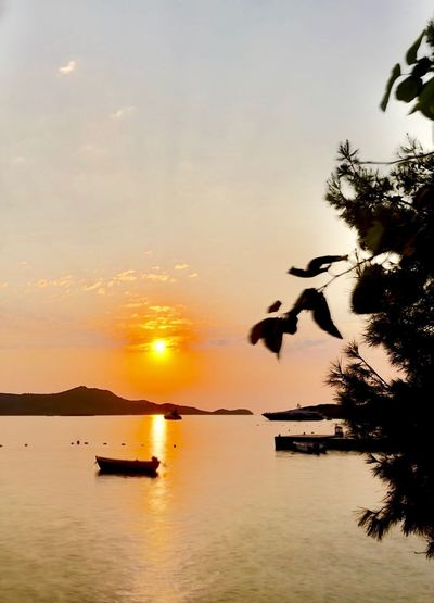 Yalıkavak bir yaz akşamı Sunset Sky Water Tree Beauty In Nature Scenics - Nature Plant Sunset Sky Water Tree Beauty In Nature Scenics - Nature Plant Sun Silhouette Nature Tranquility Bird Tranquil Scene Orange Color Reflection Vertebrate Sea Waterfront Mid-air Outdoors