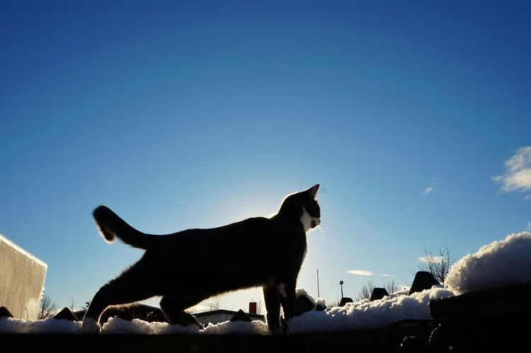 Showcase: February Beautiful Day Cats Of EyeEm Blue Sky Blue Sky And Clouds My Cat!