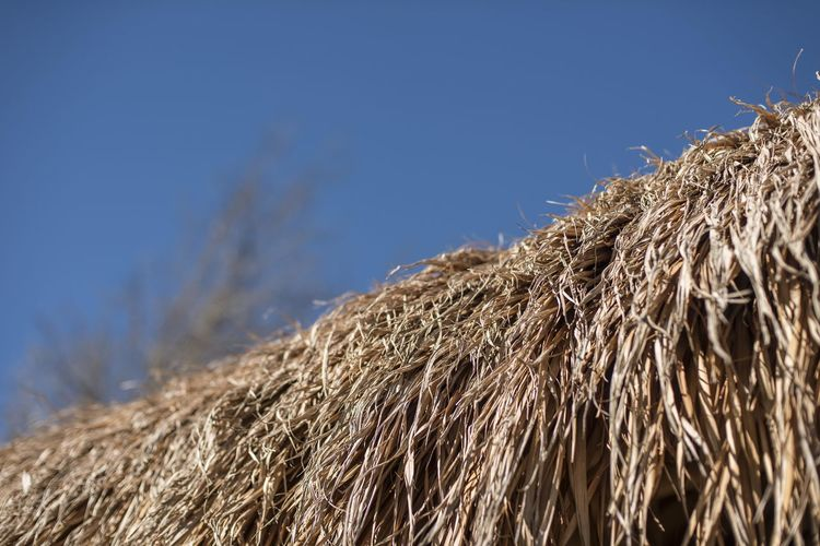 Bale  Nature Close-up Hay No People Straw Focus On Foreground Blue Rural Scene Agriculture Day Dry Plant Landscape Sky Brown Cereal Plant Outdoors Land Grass