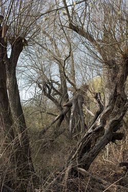 Bare Tree Branch Forest Nature Outdoors Tree Tree Trunk Wood - Material