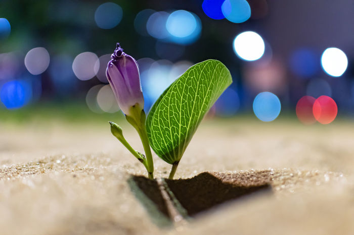 Nightlife on the beach Selective Focus Close-up Plant Nature No People Lens Flare Green Color Growth Beauty In Nature Vulnerability  Outdoors Fragility Leaf Freshness Night Plant Part Illuminated Focus On Foreground Flower Purple Beach Sand Brazil Nightlife Shadows & Lights Capture Tomorrow
