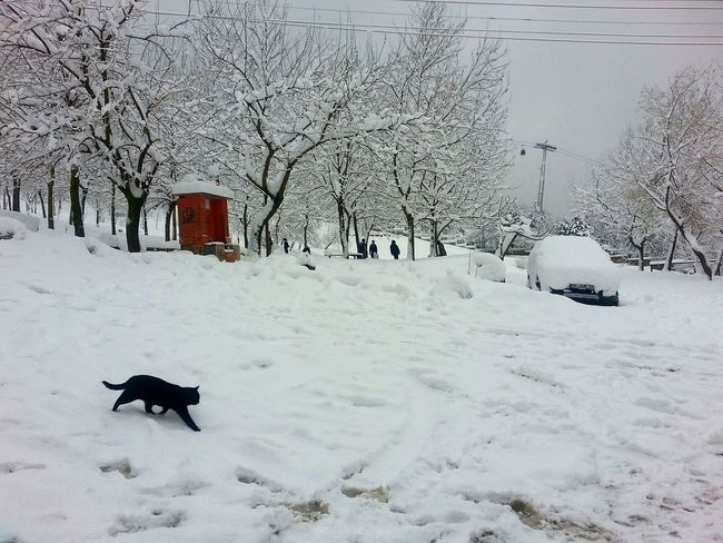 Teleferik Kar Kış Snow Winter Cold Amazing Cat Black