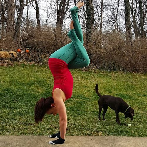 Day 15 Hahahandstand is Handstand  with Eaglelegs . The best part about this pic is Mabel!! 😁🐕 Host @cyogalab Sponsor @lululemon ❤❄ Yoga GetFit Getflexy Peace Yogi Yogagirl Asana Yogis Addictedtoyoga Igyogis Igyogafamily Yogajourney Iloveyoga Inversionjunkie Inversions Lululemon Iwillwhatiwant Outdooryoga Igfit Fitnessjourney Igfitness