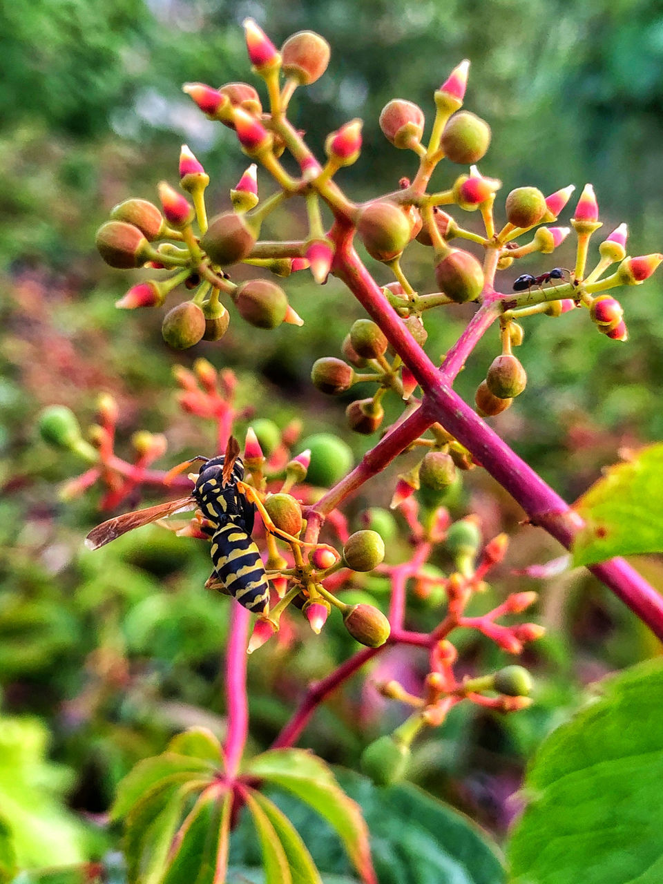 CLOSE-UP OF RED INSECT ON PLANT