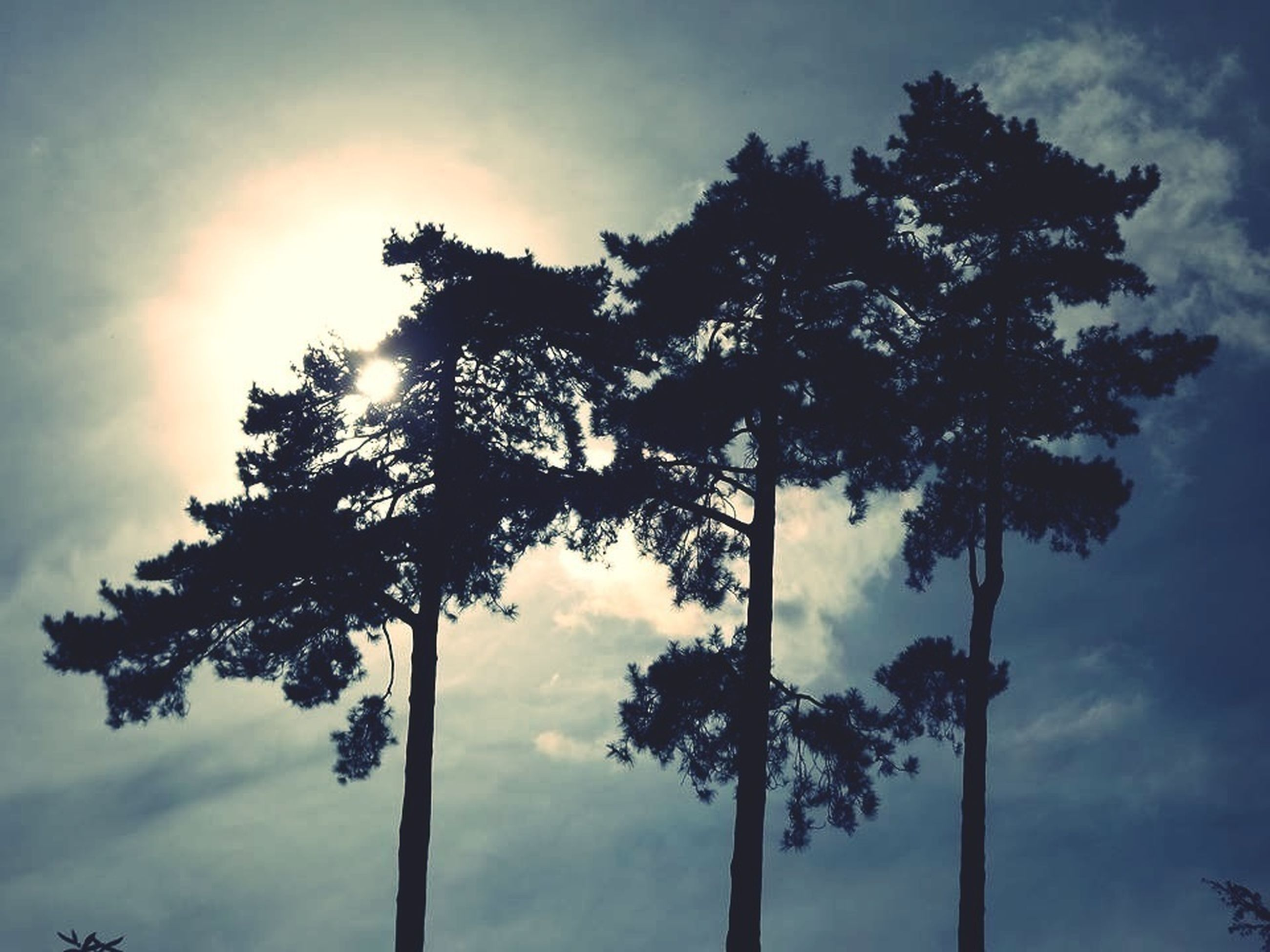 tree, low angle view, sky, cloud - sky, silhouette, tranquility, cloudy, nature, growth, cloud, beauty in nature, branch, sunlight, sun, tranquil scene, scenics, no people, outdoors, tree trunk, day