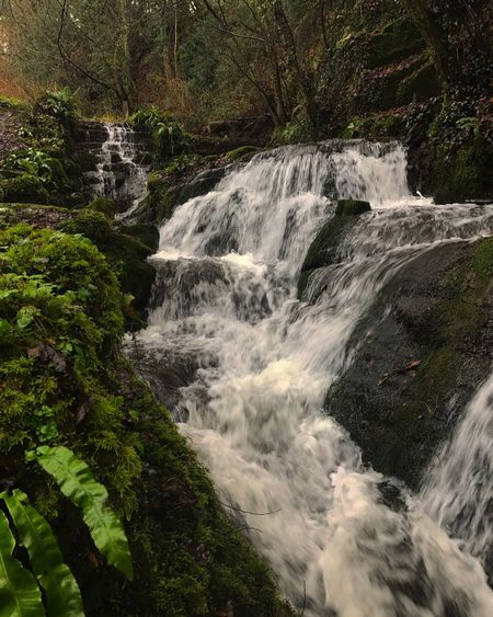 • Badger Dingle Waterfalls • Waterfall Forest Nature Tree Beauty In Nature Scenics No People Outdoors Water Rapid The Media Adventure Power In Nature Day Freshness EyeEmNewHere EyeEmNewHere EyeEmNewHere