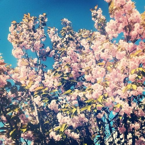 The spring thing Springison Backhome Pink