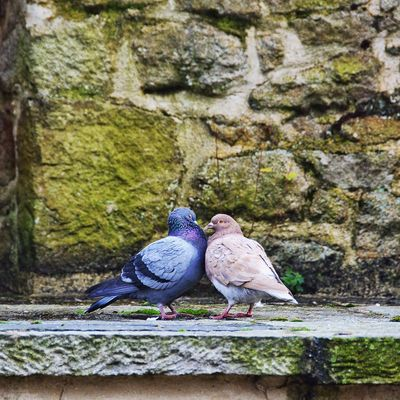 For all those love birds out there: Happy Saint Valentine's Day Valentines Love In Love Life Love In The Air Love In Nature Valentines Day Touch Kiss EyeEmFiveSenses Birds Birds In Love Life Is Beautiful The OO Mission Colour Of Life TakeoverContrast