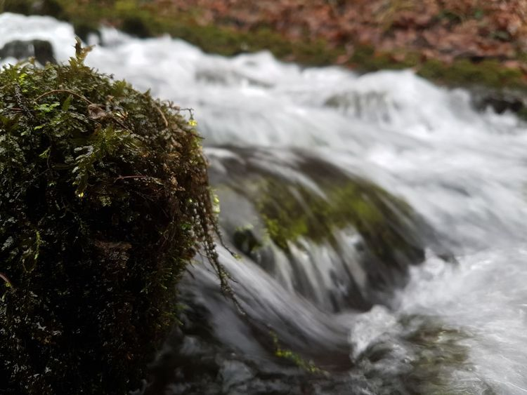 Micro jungle Motion Water Nature Beauty In Nature Day Splashing No People Outdoors Close-up Rushing Water Rapid Stones Stone Mossy Moss Growth Tranquility Scenics River Rapids Rapids River River View Stream No Edit/no Filter No Edit No Filter