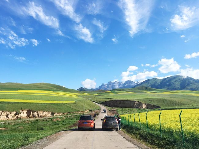 RapeFlowers Summer Views Road Outdoors Landscape From A Car Window Qilianmountains On The Way