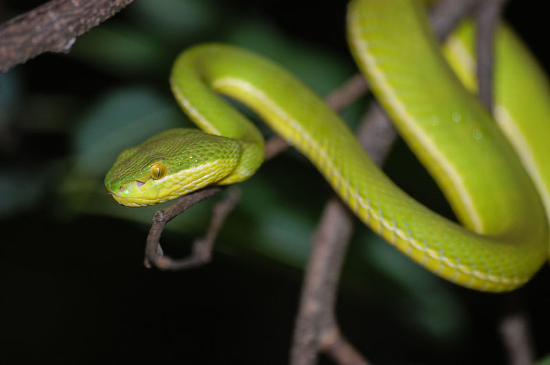 Close-up of snake on twig