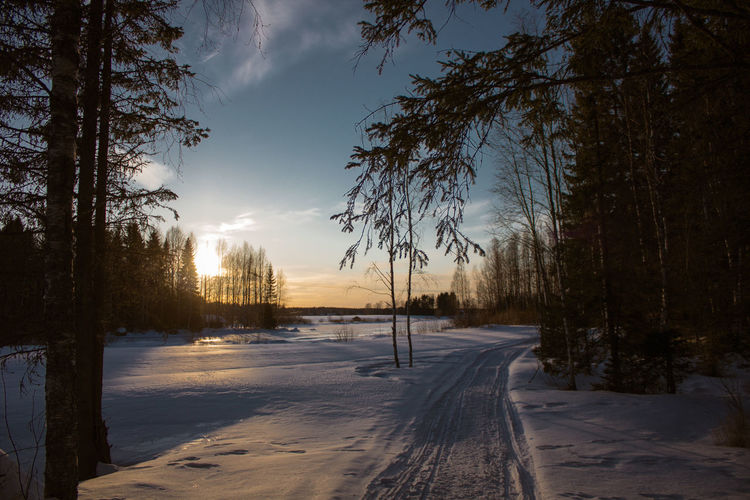 The Great Outdoors - 2018 EyeEm Awards Beauty In Nature Cold Temperature Covering Environment Frozen Land Lens Flare Nature No People Outdoors Plant Scenics - Nature Sky Snow Sun Sunlight Sunset Tranquil Scene Tranquility Tree Winter