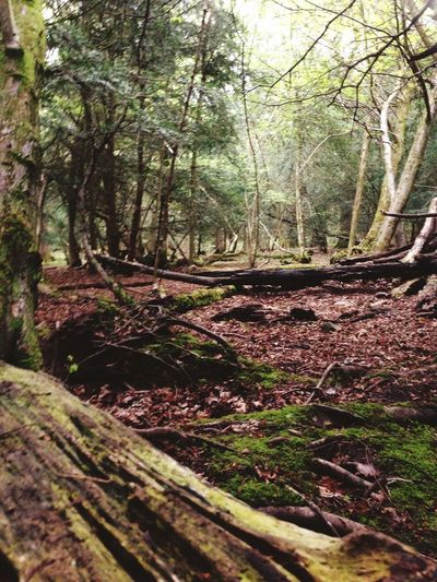 Clifton Bristol England Woods Green Trees Walking Around Taking Photos
