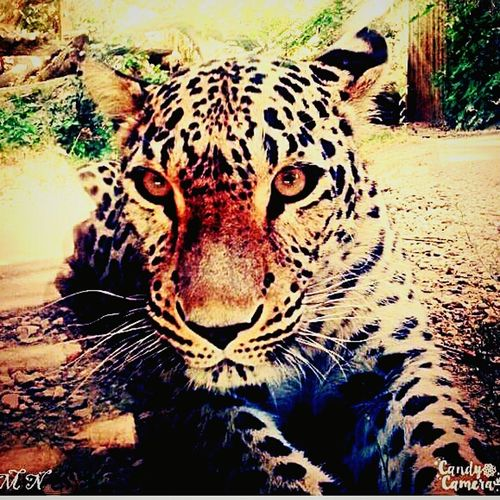 ZOO-PHOTO Zoo Popular Photo Nature_collection EyeEm Nature Lover