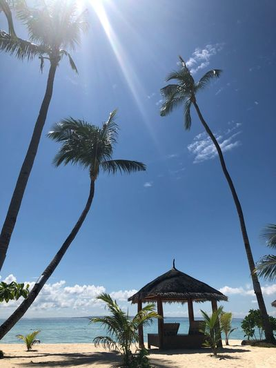 Palm trees by sea against sky on sunny day