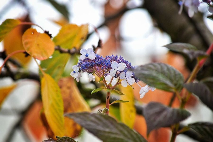 Flower Fragility Nature Growth Beauty In Nature Leaf Close-up Freshness Plant No People Outdoors Day Flower Head Blooming Outside Contradiction Bloom Season  Leaves Autumn Growth Beauty In Nature Change Autumn Leaves Fall Leaves
