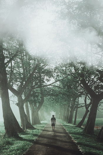 Rear view of man walking on footpath amidst trees in park during foggy weather